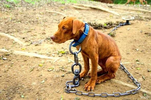 Palmares: Câmara de Vereadores, aprova Projeto de Lei que proíbe manter animais permanentemente acorrentados