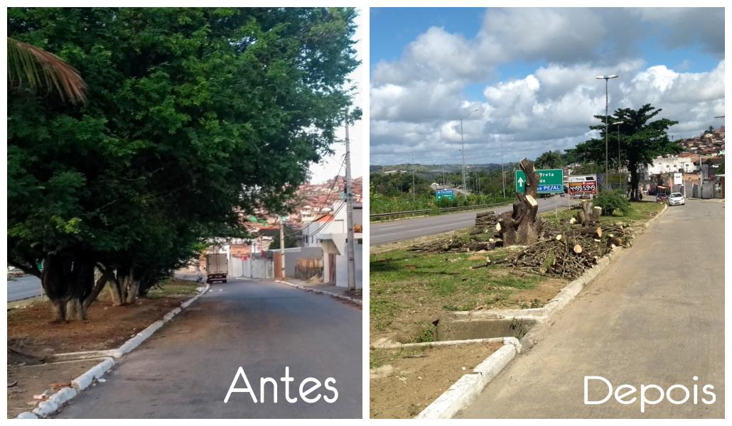 Palmares: População Revoltada com Cortes de Árvores